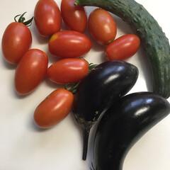 野菜/家庭菜園 家庭菜園で採れた野菜です。