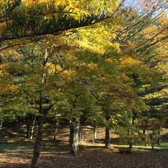 自然 もう秋も終わり冬ですね…なんとなく寂しい…