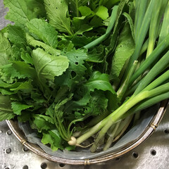 リミアな暮らし 家庭菜園で作ったお野菜です。無農薬で安心…