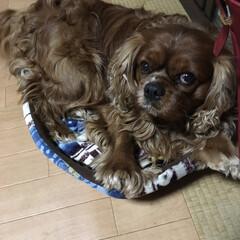 愛犬 ワンコ用のベッドを買いました。私の勘違い…