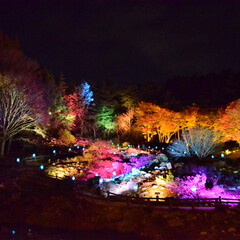 六甲/一眼レフ/LIMIAおでかけ部/ライトアップ/カメラ/二人暮らし/... 六甲高山植物園の紅葉ライトアップイベント…