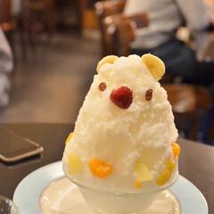 旅の写真/ゴールデンウィーク/旅行/鹿児島/シロクマ/かき氷/... 連休、鹿児島に行った際に クマ好きとして…