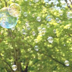 写真好き/カメラ好き/写真/一眼レフ/ピクニック/しゃぼん玉/... 友人と公園で写真散歩。 穏やかな一日、 …