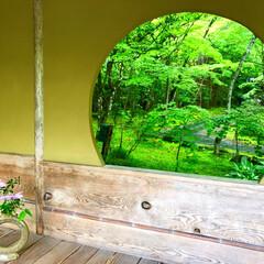 新緑/円窓/素敵/庭園/円通院/松島/... 松島近くの円通院 庭園の円窓からの新緑が…