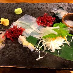 絶品/イカ刺し/居酒屋/函館/わたしのごはん/旅行 函館の居酒屋にて イカ刺しは食べたことな…