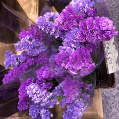 スーパーマーケット/花屋さんの花/ライフ/地元のオススメ 1、2019年8月7日、トナリエの花屋さ…(9枚目)