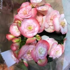 花屋さんの花/スーパーマーケット/ライフ/雨季ウキフォト投稿キャンペーン 2、2019年6月28日、ライフの花屋さ…(2枚目)