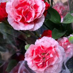ライフ/至福のひととき/花屋さんの花/スーパーマーケット 3、2019年7月4日、トナリエの花屋さ…(2枚目)