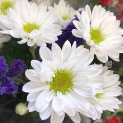 花屋さんの花/パシャリおでかけワンショット/スーパーマーケット/おでかけワンショット 4、2019年9月6日、万代の花屋さんに…(4枚目)