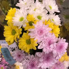 スーパーマーケット/花屋さんの花/ライフ/地元のオススメ 2、2019年8月7日、トナリエの花屋さ…(2枚目)