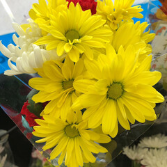 スーパーマーケット/花屋さんの花/至福のひととき 5、2019年7月12日、万代の花屋さん…(3枚目)