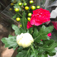 花屋さんの花/至福のひととき/スーパーマーケット/ライフ 3、2019年7月7日、トナリエの花屋さ…(5枚目)