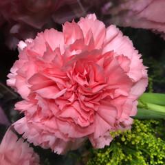 スーパーマーケット/花屋さんの花/ライフ/地元のオススメ 1、2019年8月7日、トナリエの花屋さ…