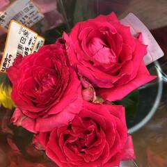 ありがとう/花屋さんの花/よってって/アクセサリー収納/ピアス収納/ネックレス収納/... 先日、買い物のついでに。よってって店。花…(5枚目)