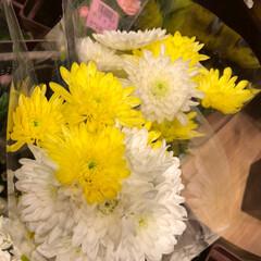 スーパーマーケット/花屋さんの花/至福のひととき/ライフ 3、2019年7月2日、トナリエの花屋さ…(4枚目)