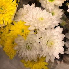 おやつ/ダイソー/ひゃっきん/スーパーマーケット/花屋さんの花/至福のひととき/... 4、2019年7月4日、トナリエの花屋さ…