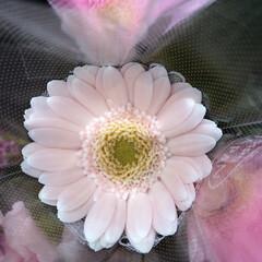 パシャリおでかけワンショット/ライフ/花屋さんの花/スーパーマーケット/おでかけワンショット 3、2019年7月28日、トナリエの花屋…(1枚目)
