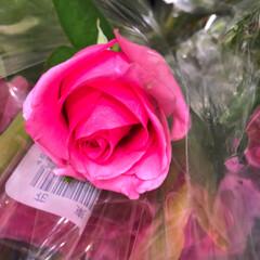スーパーマーケット/花屋さんの花/至福のひととき/ライフ 2、2019年7月4日、トナリエの花屋さ…(4枚目)