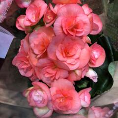花屋さんの花/スーパーマーケット/ライフ/雨季ウキフォト投稿キャンペーン 2、2019年6月28日、ライフの花屋さ…(3枚目)