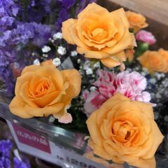 スーパーマーケット/花屋さんの花/ライフ/パシャリおでかけワンショット/おでかけワンショット 2、2019年7月28日、トナリエの花屋…(4枚目)
