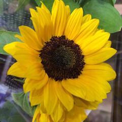 パシャリおでかけワンショット/スーパーマーケット/花屋さんの花/ライフ/おでかけワンショット 1、2019年8月2日、トナリエの花屋さ…(4枚目)