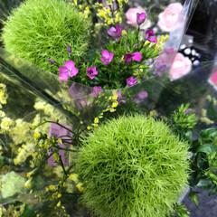 スーパーマーケット/花屋さんの花/ライフ/雨季ウキフォト投稿キャンペーン 2、2019年6月30日、トナリエの花屋…(5枚目)