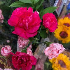 ライフ/スーパーマーケット/至福のひととき/花屋さんの花 2、2019年7月7日、トナリエの花屋さ…(5枚目)