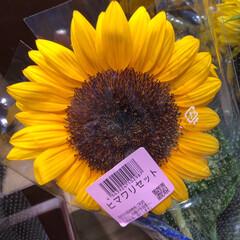 スーパーマーケット/花屋さんの花/ライフ/地元のオススメ 1、2019年8月7日、トナリエの花屋さ…(6枚目)