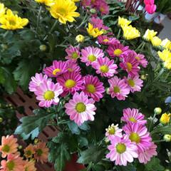 フォト投稿テーマ大募集!/花屋さんの花/コーナン/次のコンテストはコレだ! 1、2019年10月18日、コーナンの花…(3枚目)