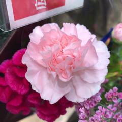 パシャリおでかけワンショット/ライフ/花屋さんの花/スーパーマーケット/おでかけワンショット 3、2019年7月28日、トナリエの花屋…(3枚目)