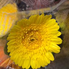 花屋さんの花/スーパーマーケット/ライフ/雨季ウキフォト投稿キャンペーン 2、2019年6月28日、ライフの花屋さ…(8枚目)