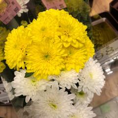 スーパーマーケット/花屋さんの花/至福のひととき/ライフ 3、2019年7月2日、トナリエの花屋さ…(7枚目)
