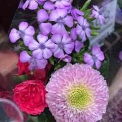 スーパーマーケット/ライフ/至福のひととき/花屋さんの花 1、2019年7月12日、トナリエの花屋…(8枚目)