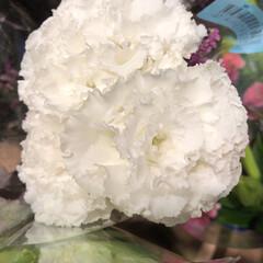 スーパーマーケット/花屋さんの花/ライフ/地元のオススメ 1、2019年8月7日、トナリエの花屋さ…(3枚目)