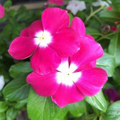 残暑見舞い申し上げます/産直市場/花屋さんの花/よってって/インテリア/プチプラ/... 2021年8月7日、美しい花を見てカメラ…(4枚目)