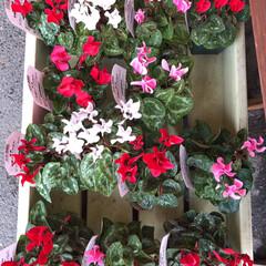 コーナン/花屋さんの花/フォト投稿テーマ大募集! 2、2019年10月18日、コーナンの花…(10枚目)