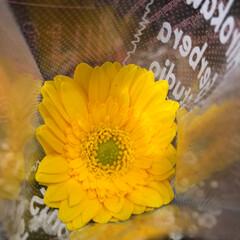 至福のひととき/花屋さんの花/スーパーマーケット/ライフ 2、2019年7月2日、トナリエの花屋さ…(8枚目)