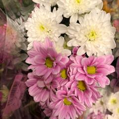 花屋さんの花/至福のひととき/スーパーマーケット/ライフ 3、2019年7月7日、トナリエの花屋さ…