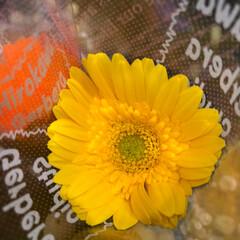 至福のひととき/花屋さんの花/スーパーマーケット/ライフ 2、2019年7月2日、トナリエの花屋さ…(7枚目)