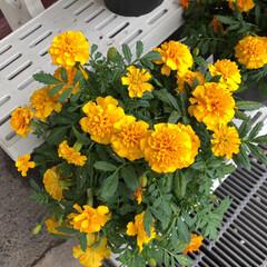 至福のひととき/花屋さんの花/コーナン 4、2019年7月12日、コーナンの花屋…