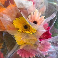 よってって/花屋さんの花/産直市場/残暑見舞い申し上げます/ハンドメイド/プレゼント/... 2021時9月1日(水)、アラニスより愛…(5枚目)