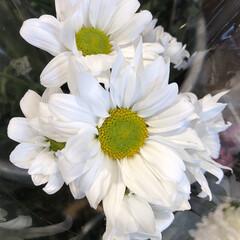 花屋さんの花/ありがとう/よってって/七夕飾り/季節インテリア/七夕インテリア/... 3、2020年6月26日、本日、久米診療…(6枚目)