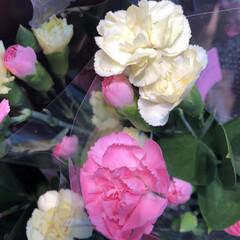 わたしのお盆/スーパーマーケット/花屋さんの花/ライフ 1、2019年8月18日、トナリエの花屋…(6枚目)