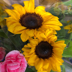 ライフ/スーパーマーケット/至福のひととき/花屋さんの花 2、2019年7月7日、トナリエの花屋さ…(8枚目)