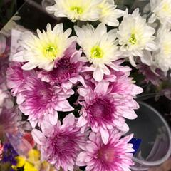 ライフ/至福のひととき/花屋さんの花/スーパーマーケット 3、2019年7月4日、トナリエの花屋さ…(6枚目)