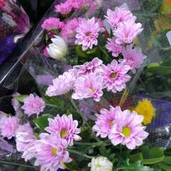 花屋さんの花/スーパーマーケット/ライフ/雨季ウキフォト投稿キャンペーン 1、2019年6月30日、トナリエの花屋…