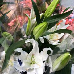 花屋さんの花/スーパーマーケット/ライフ/雨季ウキフォト投稿キャンペーン 2、2019年6月28日、ライフの花屋さ…(6枚目)