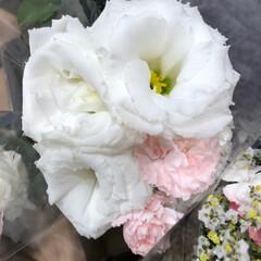 スーパーマーケット/花屋さんの花/至福のひととき/ライフ 2、2019年7月4日、トナリエの花屋さ…(9枚目)