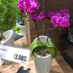スーパーマーケット/ライフ/至福のひととき/花屋さんの花 1、2019年7月12日、トナリエの花屋…(2枚目)