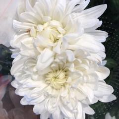 花屋さんの花/ありがとう/よってって/七夕飾り/季節インテリア/七夕インテリア/... 3、2020年6月26日、本日、久米診療…(5枚目)